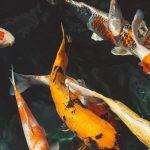 Аквариумные и промысловые рыбы
